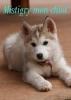missnolwenn11 - éleveur canin Dogzer