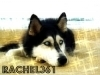 rachel361 - éleveur canin Dogzer