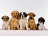 monchienwoofi - éleveur canin Dogzer