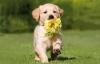 tolichon - éleveur canin Dogzer