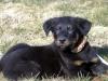 Flammechee - éleveur canin Dogzer