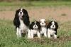 jujubaveuse89 - éleveur canin Dogzer
