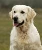 leab99 - éleveur canin Dogzer