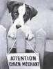 chipie107 - éleveur canin Dogzer
