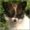 chien002 - éleveur canin Dogzer