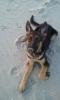 bibouille3 - éleveur canin Dogzer