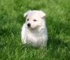 utica - éleveur canin Dogzer