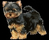 Ouahouah - éleveur canin Dogzer