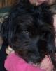 lounachien - éleveur canin Dogzer