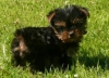 mamie78 - éleveur canin Dogzer