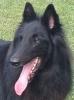 Himano - éleveur canin Dogzer