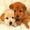 Mado22 - éleveur canin Dogzer