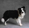 Wouuaf - éleveur canin Dogzer