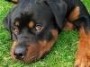 nono77210 - éleveur canin Dogzer