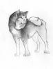 cayla-imane - éleveur canin Dogzer