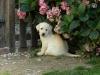 melle.andrea - éleveur canin Dogzer