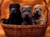 marie-13 - éleveur canin Dogzer