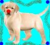 mylene41 - éleveur canin Dogzer