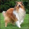angeldu59100 - éleveur canin Dogzer