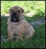 niyama - éleveur canin Dogzer