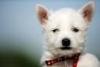 margautalix - éleveur canin Dogzer