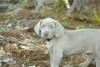 LoganT - éleveur canin Dogzer
