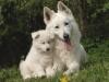 nana11081996 - éleveur canin Dogzer