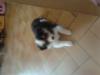 legranr6 - éleveur canin Dogzer
