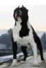 kev972 - éleveur canin Dogzer