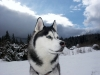 SKYPO - éleveur canin Dogzer