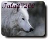 tala29200 - éleveur canin Dogzer