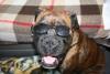 misszanimoo - éleveur canin Dogzer