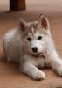 tititou - éleveur canin Dogzer