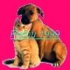 Fanye48 - éleveur canin Dogzer