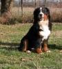 cocolapi125 - éleveur canin Dogzer