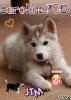 caroline750 - éleveur canin Dogzer