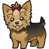 Sokko - éleveur canin Dogzer
