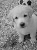 emajijou - éleveur canin Dogzer
