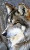 mimijolie0 - éleveur canin Dogzer