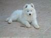 Tally64 - éleveur canin Dogzer