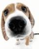 sisters47 - éleveur canin Dogzer