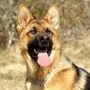 raph12 - éleveur canin Dogzer