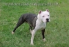 sarah963 - éleveur canin Dogzer