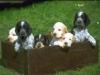 prince85670 - éleveur canin Dogzer