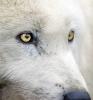 fetch - éleveur canin Dogzer