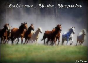 Les Chevaux .... Un rêve , Une passion