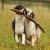L\'association de recueil des chiens