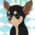 Jeux Chihuahua à la mode