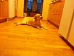 MAGGIE - Cerbère (chien légendaire) (8 ans)