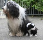 Kassam 5 semaines et son papa - Colley barbu
